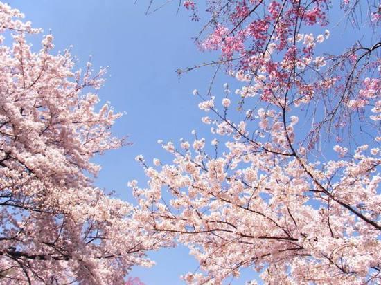 2009_0407_下高井戸3