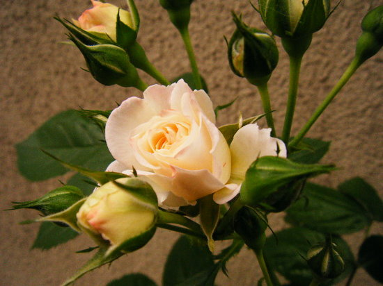 2011_0525_174455-DSCF2548.JPG