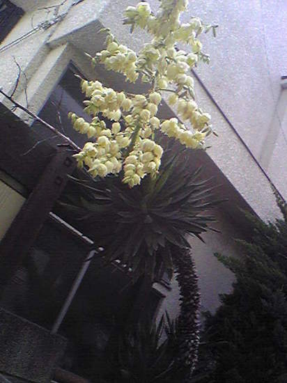 2009/05/26