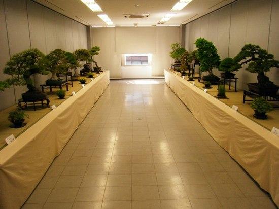 緑風盆栽展2009_0426