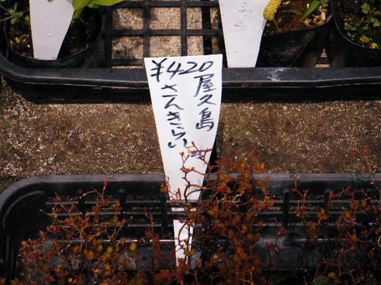 2010_0429_111037-DSCF4212.JPG