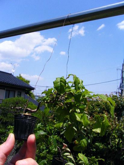 2012_0527_122910-DSCF9508.JPG