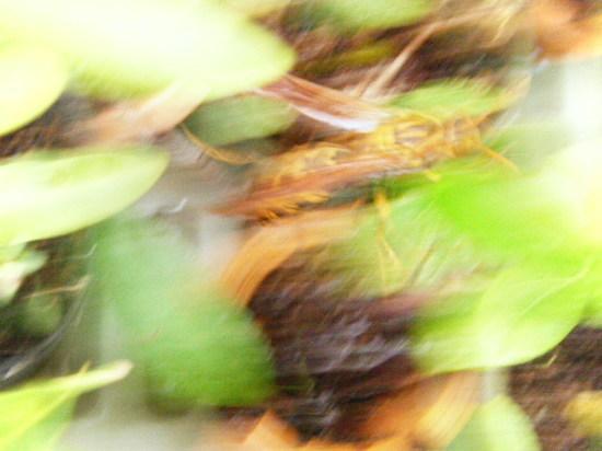 2012_0823_142054-DSCF6187.JPG