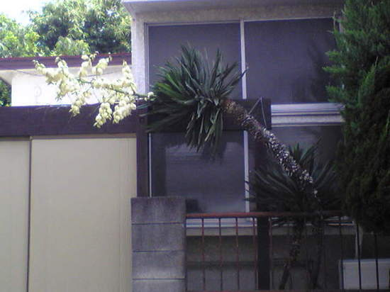 2009/0526
